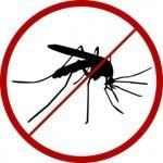 chikungunya-virus-mosquito